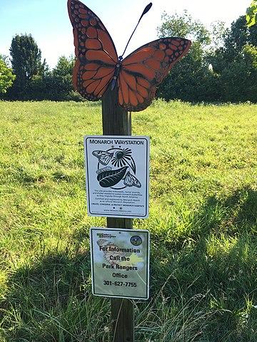 Monarch Butterfly Waystation, Berwyn Heights, Maryland, by Geraldshields11